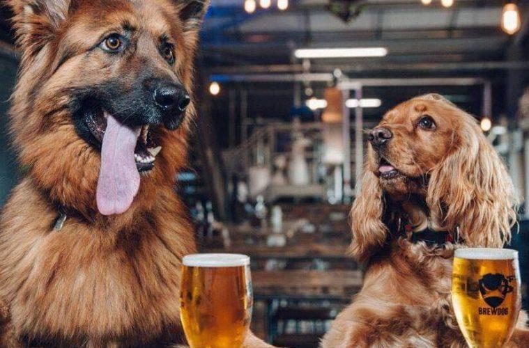 Brewdog Liverpool Dog Friendly
